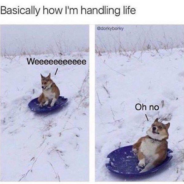 How I'm Handling Life
