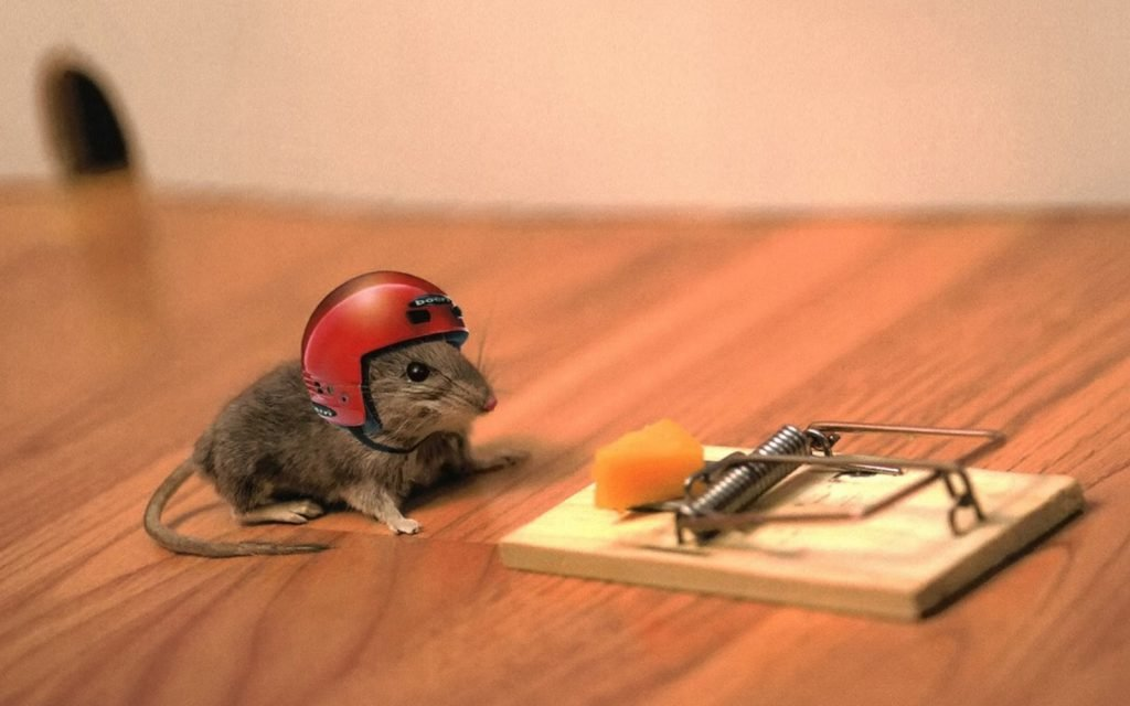 Mouse Attempting To Get Cheese From Mousetrap