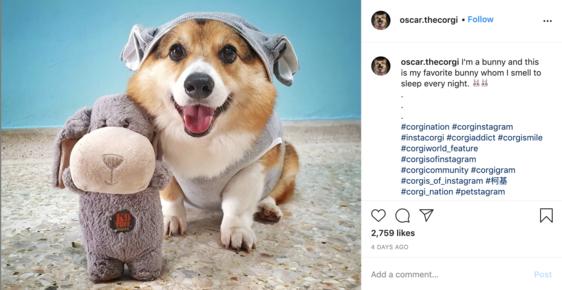 oscar the corgi instagram